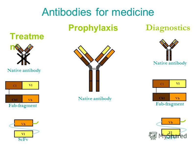 Antibodies for medicine Treatme nt Prophylaxis Diagnostics Vl Cl Vh Ch1 Fab-fragment Vl Vh ScFv Native antibody Vl Cl Vh Ch1 Fab-fragment Vl Vh ScFv Native antibody