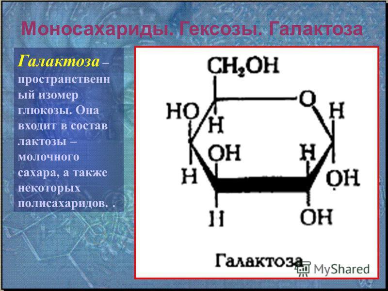 Моносахариды. Гексозы. Галактоза Галактоза – пространственный изомер глюкозы. Она входит в состав лактозы – молочного сахара, а также некоторых полисахаридов..