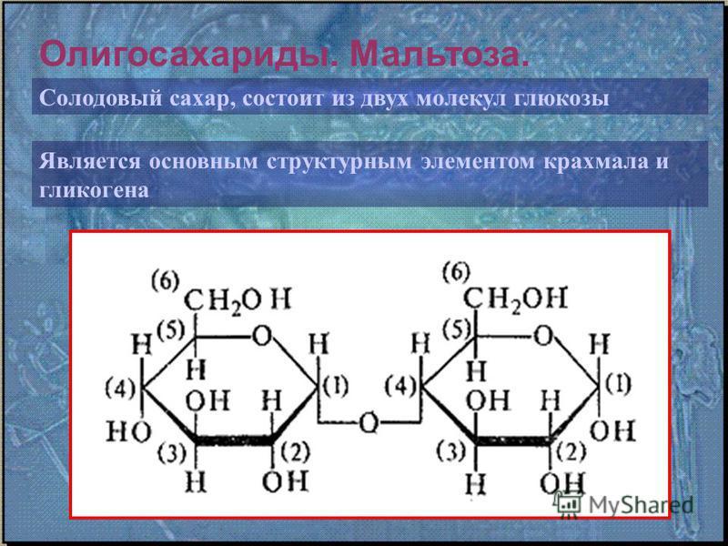 Олигосахариды. Мальтоза. Солодовый сахар, состоит из двух молекул глюкозы Является основным структурным элементом крахмала и гликогена