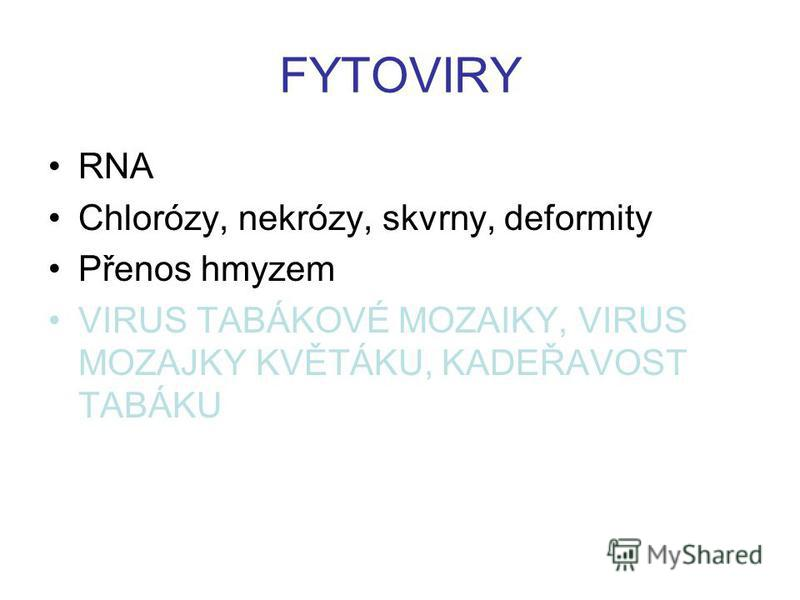 FYTOVIRY RNA Chlorózy, nekrózy, skvrny, deformity Přenos hmyzem VIRUS TABÁKOVÉ MOZAIKY, VIRUS MOZAJKY KVĚTÁKU, KADEŘAVOST TABÁKU