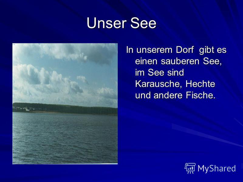 Unser See In unserem Dorf gibt es einen sauberen See, im See sind Karausche, Hechte und andere Fische.
