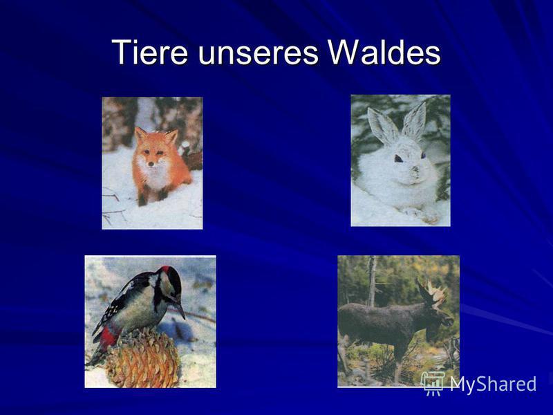 Tiere unseres Waldes