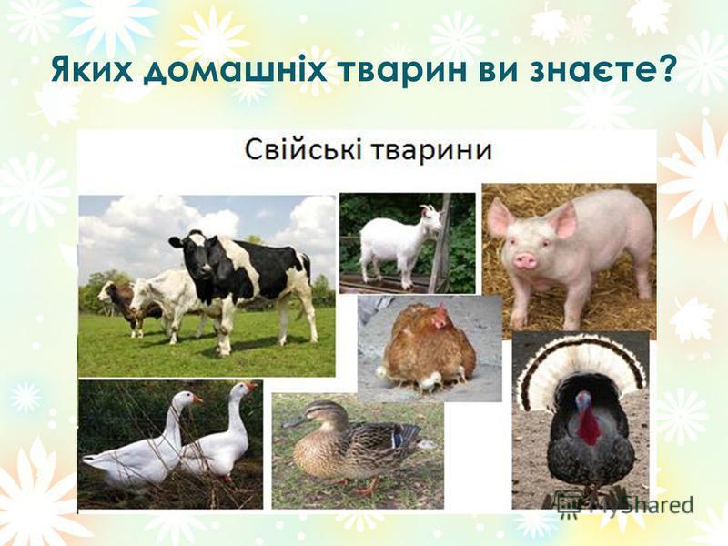 Яких домашніх тварин ви знаєте?