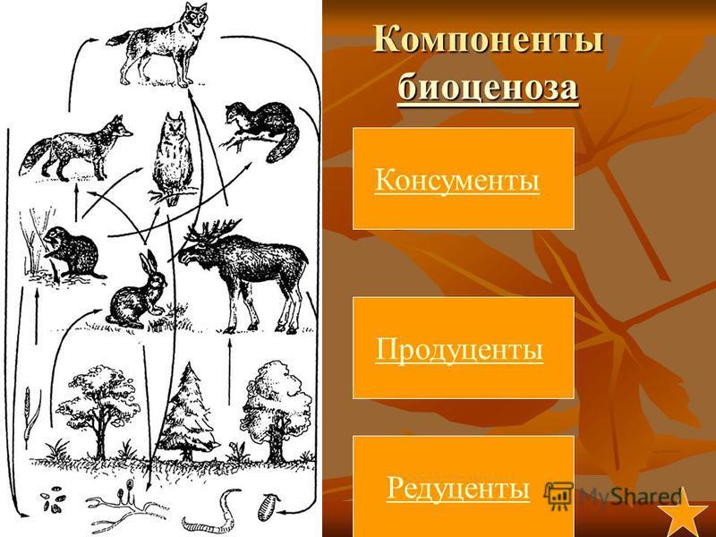 Компоненты биоценоза биоценоза Продуценты Консументы Редуценты