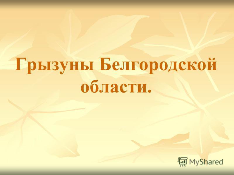 Грызуны Белгородской области.