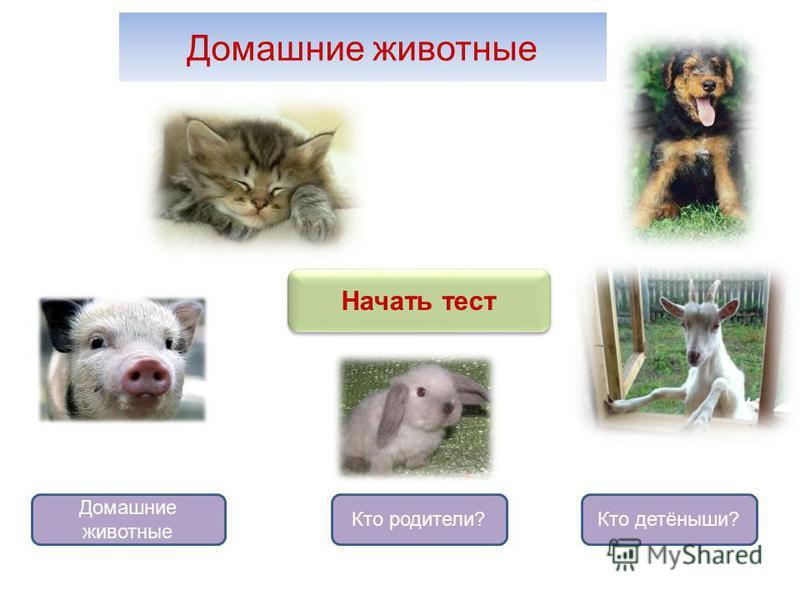 Домашние животные Домашние животные Кто родители?Кто детёныши? Начать тест