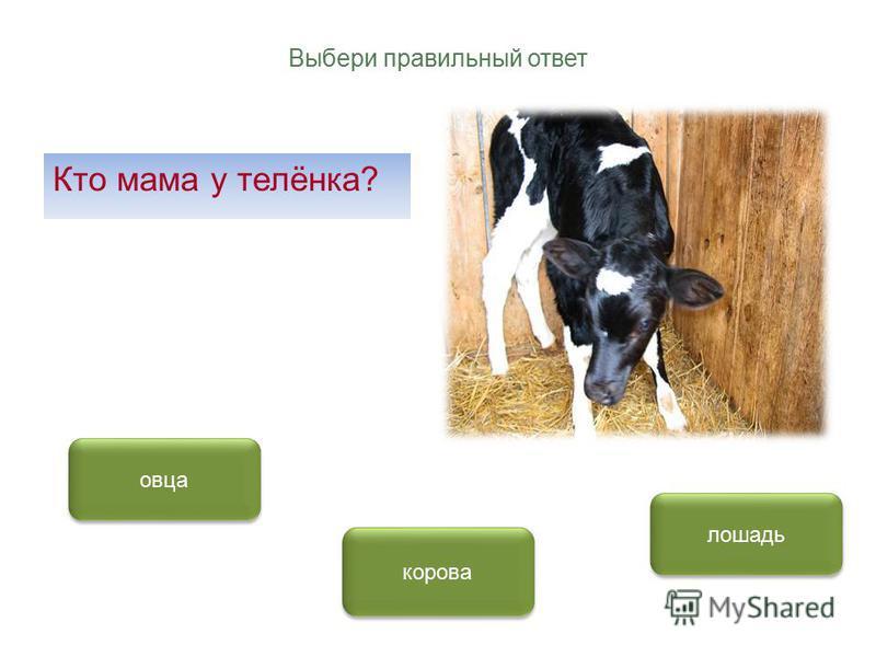 Выбери правильный ответ Кто мама у телёнка? корова овца лошадь