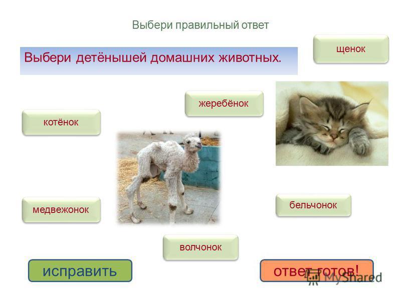 Выбери правильный ответ Выбери детёнышей домашних животных. котёнок щенок жеребёнок волчонок медвежонок бельчонок исправить ответ готов!