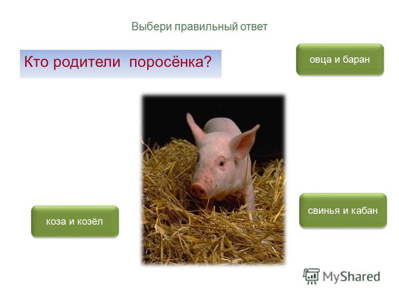 Выбери правильный ответ Кто родители поросёнка? свинья и кабан овца и баран коза и козёл