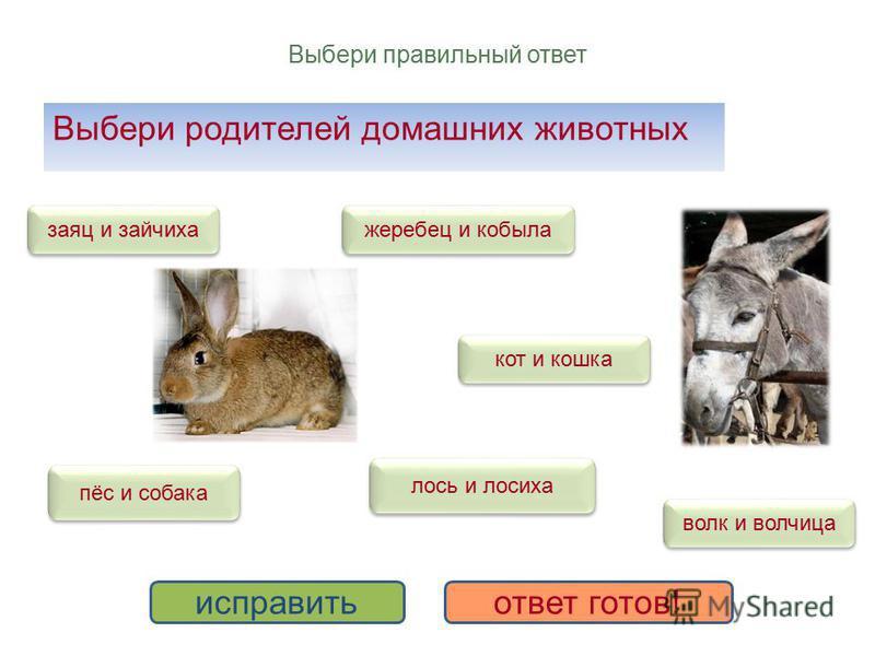 Выбери правильный ответ Выбери родителей домашних животных жеребец и кобыла пёс и собака кот и кошка лось и лосиха волк и волчица заяц и зайчиха исправить ответ готов!
