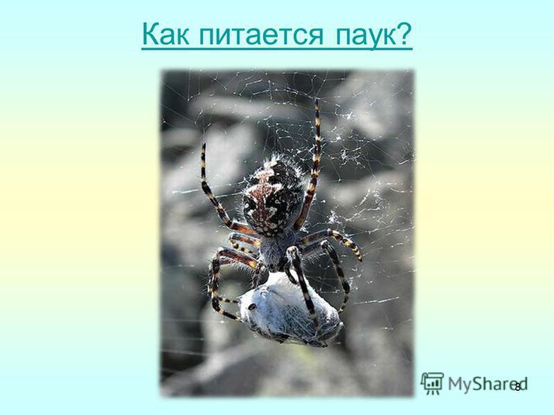 Как питается паук? 8