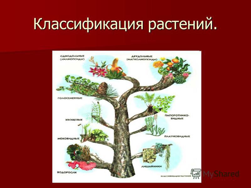 Классификация растений.