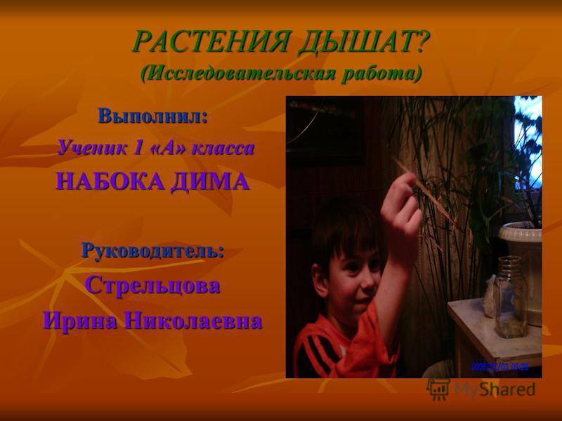 РАСТЕНИЯ ДЫШАТ? (Исследовательская работа) Выполнил: Ученик 1 «А» класса НАБОКА ДИМА Руководитель: Стрельцова Ирина Николаевна