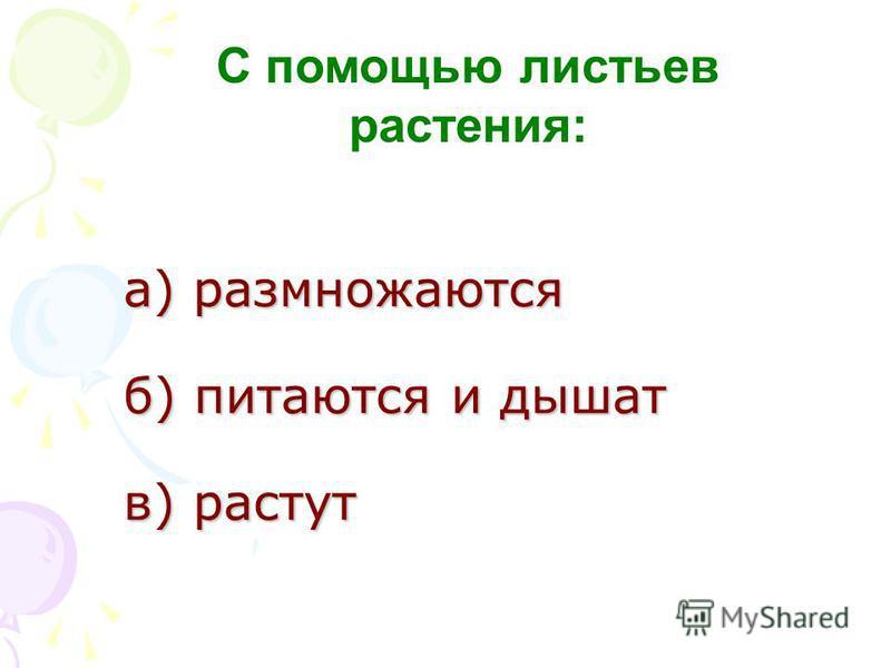 а) размножаются б) питаются и дышат в) растут а) размножаются б) питаются и дышат в) растут С помощью листьев растения: