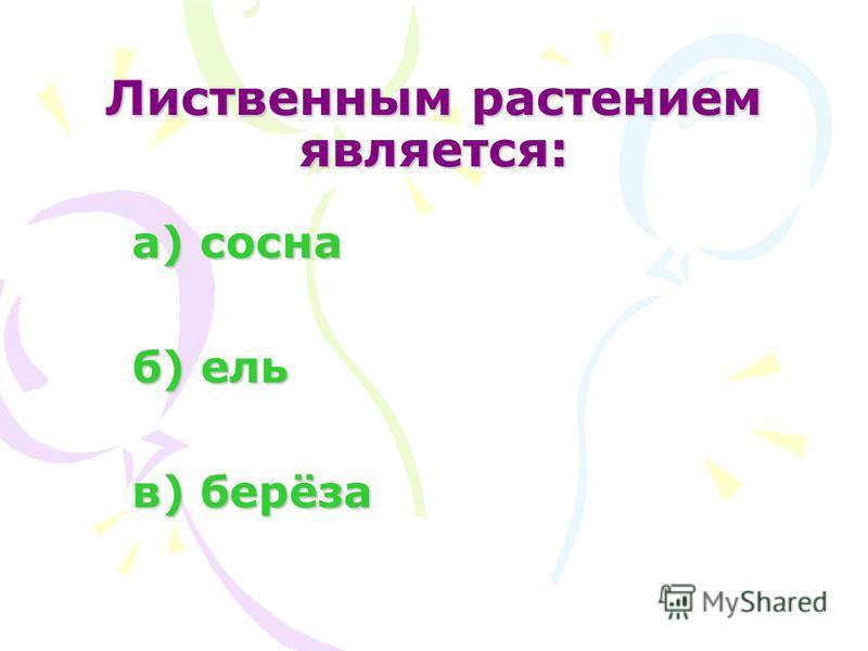 Лиственным растением является: а) сосна а) сосна б) ель б) ель в) берёза в) берёза