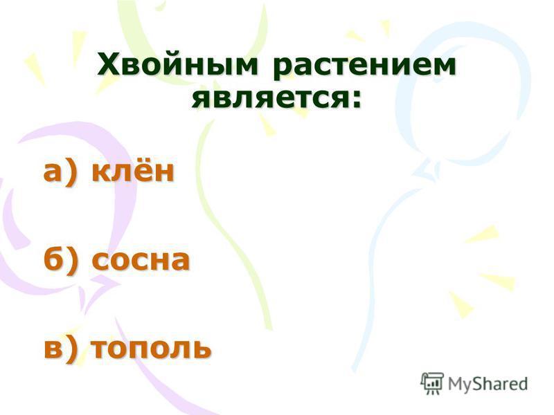 Хвойным растением является: а) клён б) сосна в) тополь