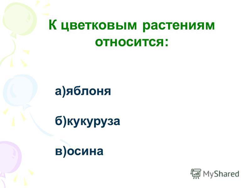 К цветковым растениям относится: а)яблоня б)кукуруза в)осина