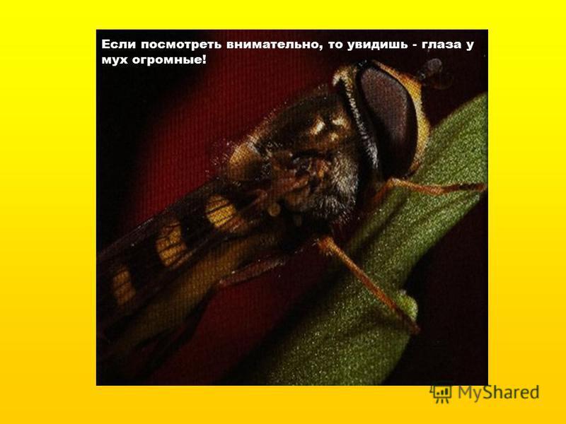 Если посмотреть внимательно, то увидишь - глаза у мух огромные!