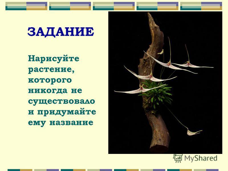 ЗАДАНИЕ Нарисуйте растение, которого никогда не существовало и придумайте ему название