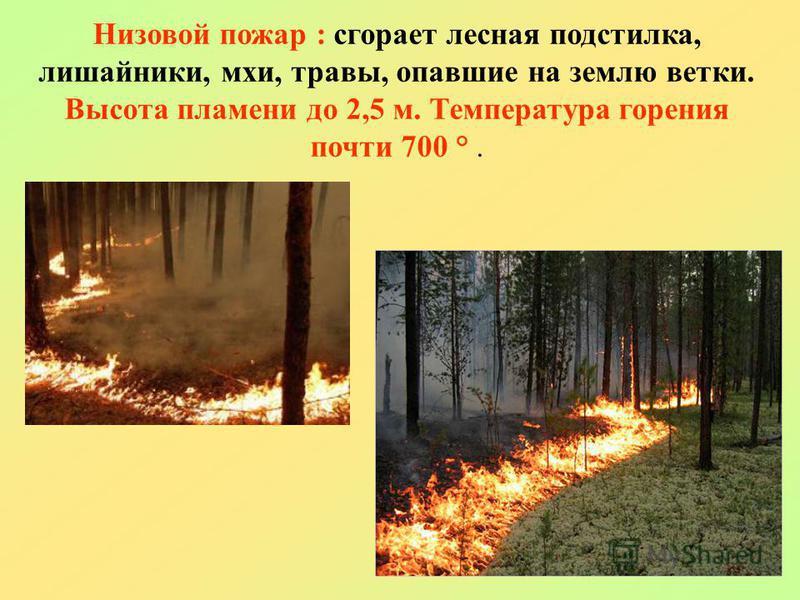 Низовой пожарр : сгорает лесная подстилка, лишайники, мхи, травы, опавшие на землю ветки. Высота пламени до 2,5 м. Температура горения почти 700 °.