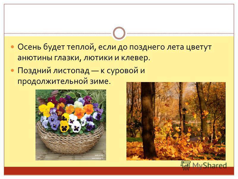Осень будет теплой, если до позднего лета цветут анютины глазки, лютики и клевер. Поздний листопад к суровой и продолжительной зиме.