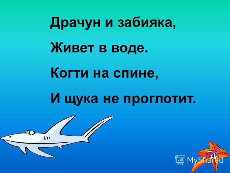 Драчун и забияка, Живет в воде. Когти на спине, И щука не проглотит.