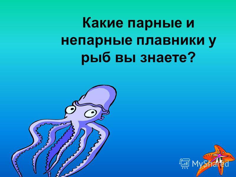 Какие парные и непарные плавники у рыб вы знаете?