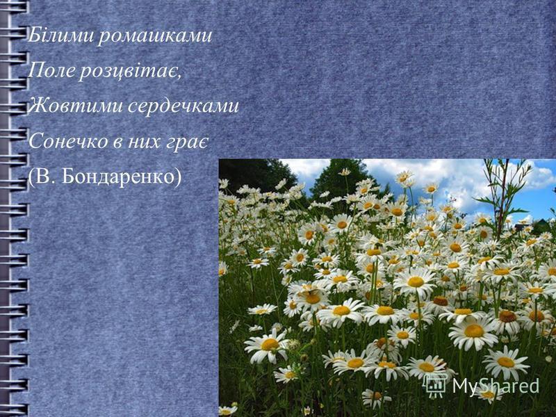 Білими ромашками Поле розцвітає, Жовтими сердечками Сонечко в них грає (В. Бондаренко)