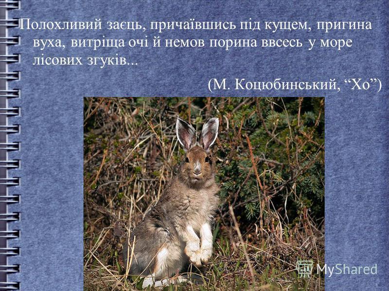 Полохливий заєць, причаївшись під кущем, пригина вуха, витріща очі й немов порина ввсесь у море лісових згуків... (М. Коцюбинський, Хо)