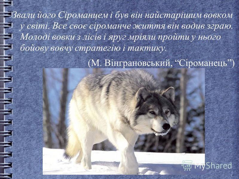 Звали його Сіроманцем і був він найстарішим вовком у світі. Все своє сіроманче життя він водив зграю. Молоді вовки з лісів і яруг мріяли пройти у нього бойову вовчу стратегію і тактику. (М. Вінграновський, Сіроманець)