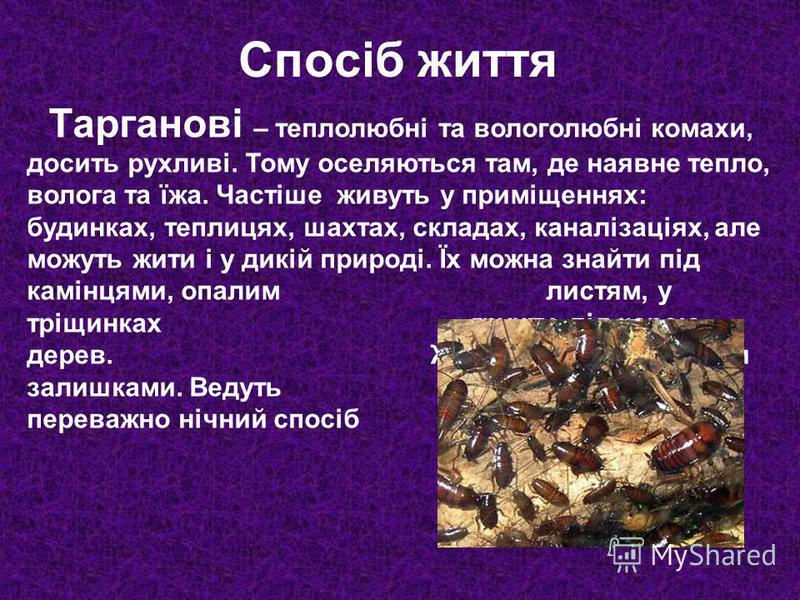 Тарганові – теплолюбні та вологолюбні комахи, досить рухливі. Тому оселяються там, де наявне тепло, волога та їжа. Частіше живуть у приміщеннях: будинках, теплицях, шахтах, складах, каналізаціях, але можуть жити і у дикій природі. Їх можна знайти під