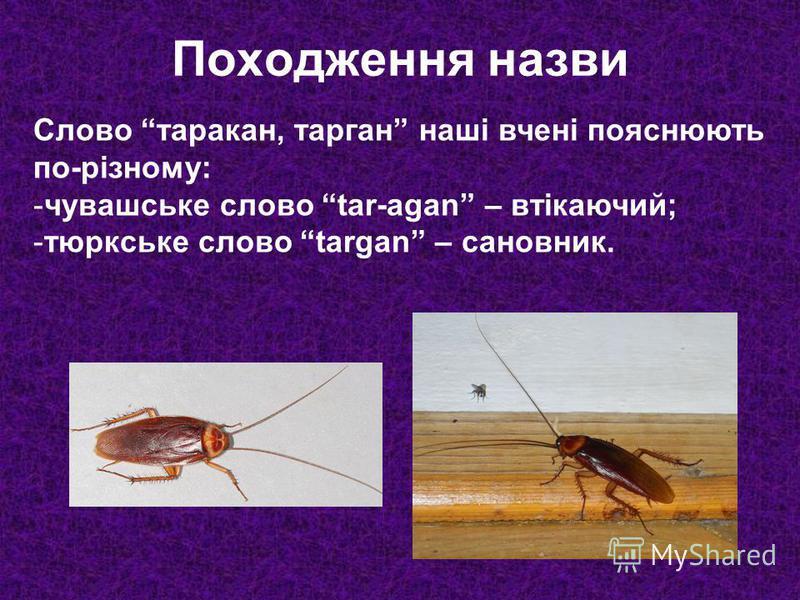 Слово таракан, тарган наші вчені пояснюють по-різному: -чувашське слово tar-agan – втікаючий; -тюркське слово targan – сановник. Походження назви