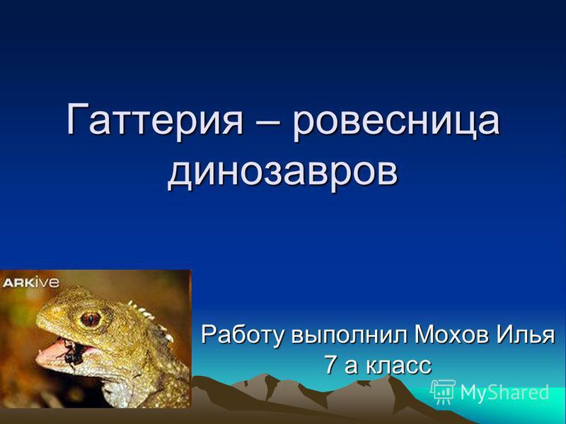 Гаттерия – ровесница динозавров Работу выполнил Мохов Илья 7 а класс