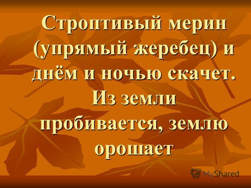 Строптивый мерин (упрямый жеребец) и днём и ночью скачет. Из земли пробивается, землю орошает