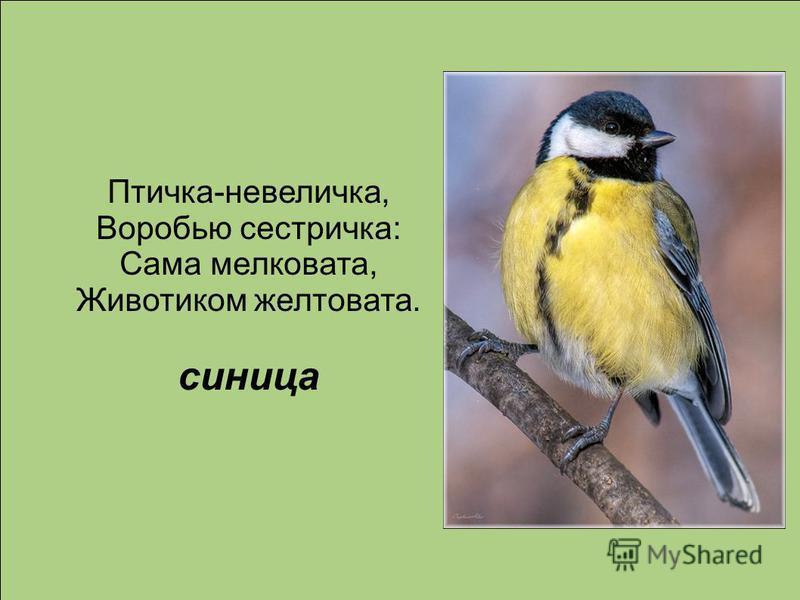 Птичка-невеличка, Воробью сестричка: Сама мелковата, Животиком желтовата. синица