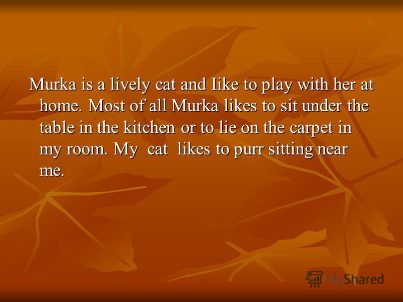 Murka is a lively cat and Iike to play with her at home. Most of all Murka likes to sit under the table in the kitchen or to lie on the carpet in my room. My cat likes to purr sitting near me. Murka is a lively cat and Iike to play with her at home.