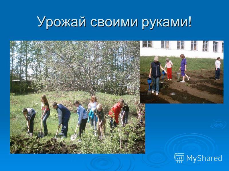 Урожай своими руками!