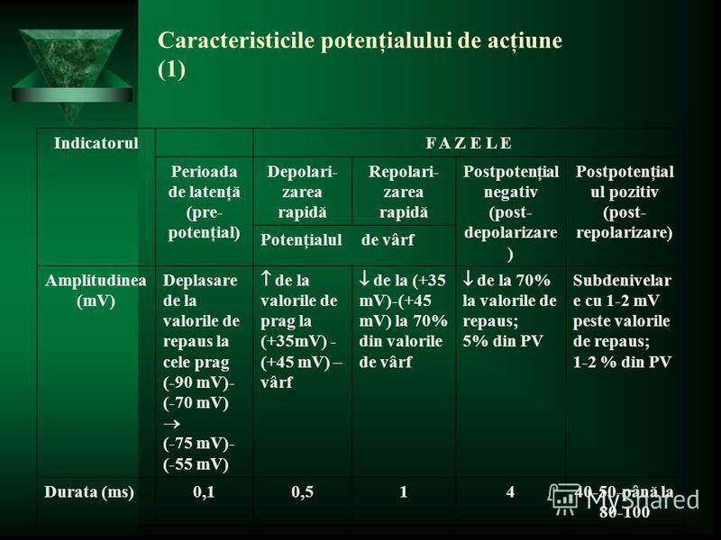 Caracteristicile potenţialului de acţiune (1) IndicatorulF A Z E L E Perioada de latenţă (pre- potenţial) Depolari- zarea rapidă Repolari- zarea rapidă Postpotenţial negativ (post- depolarizare ) Postpotenţial ul pozitiv (post- repolarizare) Potenţia