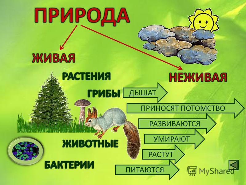 Природа удивительно разнообразна В природе всё взаимосвязано Люди не могут жить без природы Значение природы для человека Связи в природе Разнообразие природы и её классификация