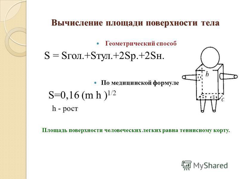 Вычисление площади поверхности тела Геометрический способ S = Sгол.+Sтул.+2Sр.+2Sн. По медицинской формуле S=0,16 (m h ) 1/2 h - рост Площадь поверхности человеческих легких равна теннисному корту.