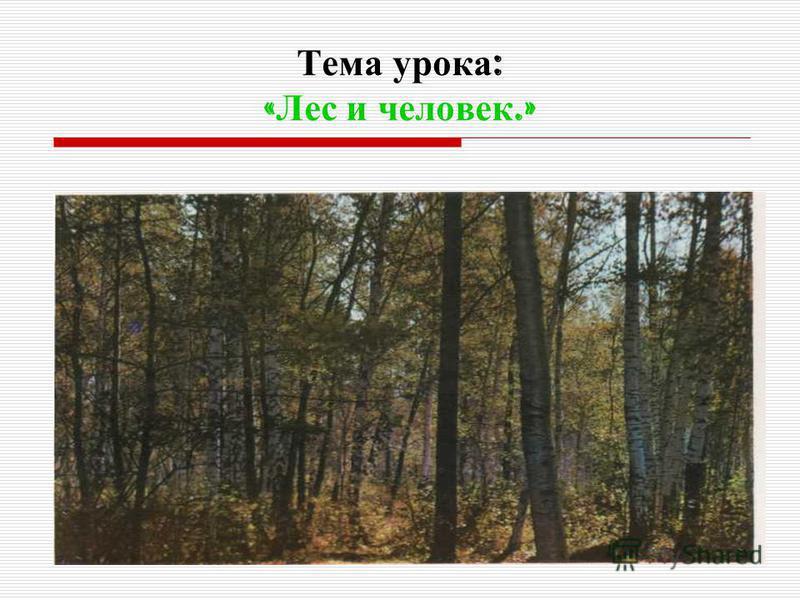 Тема урока : « Лес и человек.»