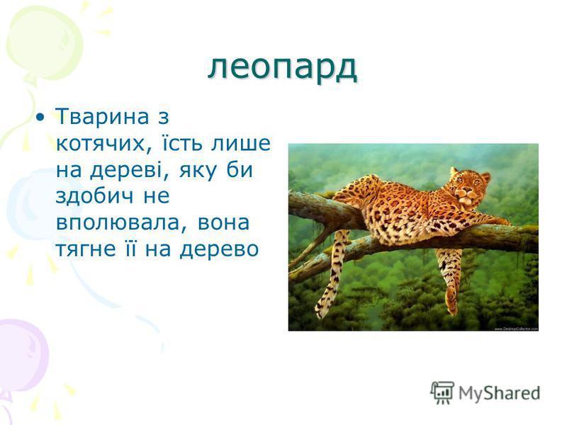 леопард Тварина з котячих, їсть лише на дереві, яку би здобич не вполювала, вона тягне її на дерево
