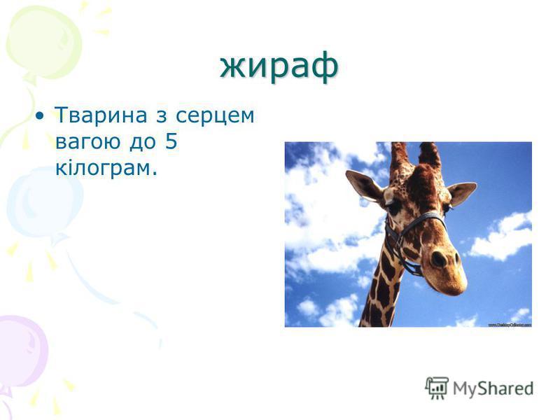 жираф Тварина з серцем вагою до 5 кілограм.