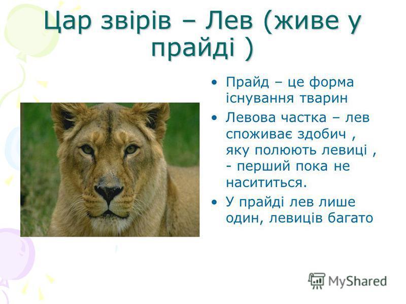 Цар звірів – Лев (живе у прайді ) Прайд – це форма існування тварин Левова частка – лев споживає здобич, яку полюють левиці, - перший пока не насититься. У прайді лев лише один, левиців багато