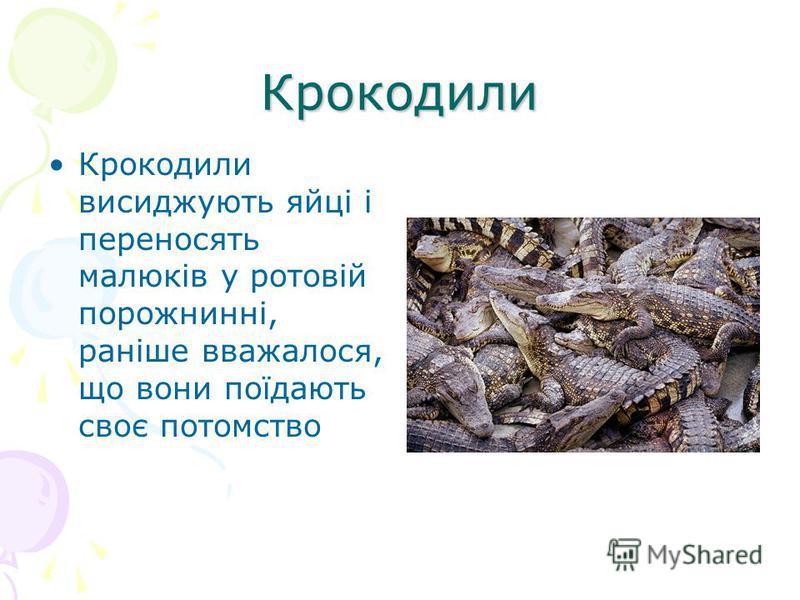 Крокодили Крокодили висиджують яйці і переносять малюків у ротовій порожнинні, раніше вважалося, що вони поїдають своє потомство