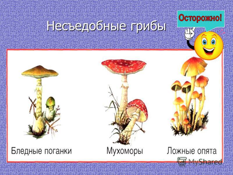Несъедобные грибы Несъедобные грибы