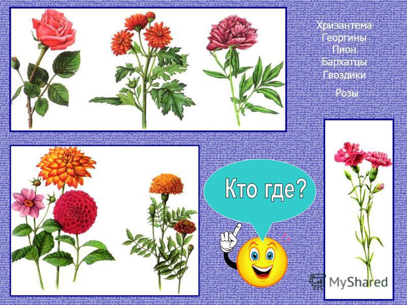 Хризантема Георгины Пион Бархатцы Гвоздики Розы