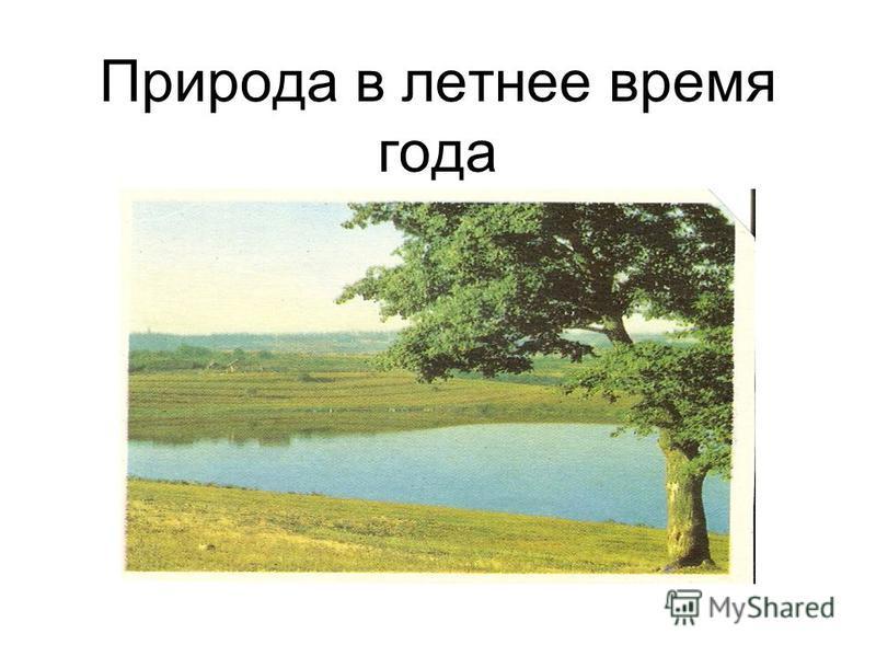 Природа в летнее время года