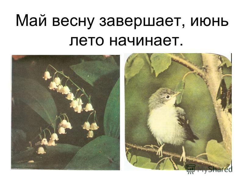 Май весну завершает, июнь лето начинает.