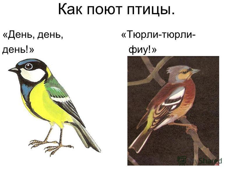 Как поют птицы. «День, день, «Тюрли-тюрли- день!» фэу!»